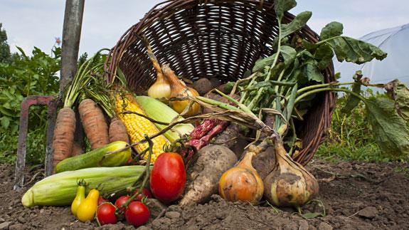 Ekološka poljoprivreda i njezin pozitivan utjecaj na ljude i okoliš